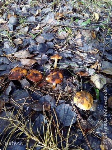 По грибы... или хорошо в лесу. фото 11