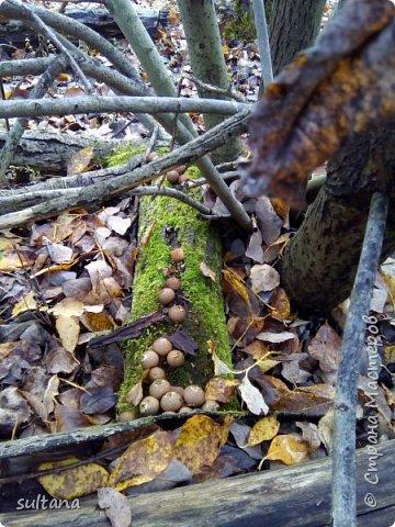 По грибы... или хорошо в лесу. фото 10