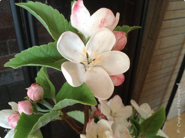Цветы запоздалые..... Яблоневый цвет из полимерной глины . Ручная работа. фото 8
