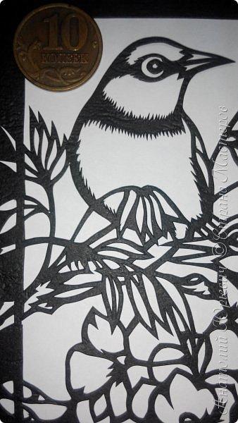 """Всем добрый день! Вашему вниманию новая открытка с птичками. - Серебряная белоглазка (Zosterops lateralis) — род птиц семейства белоглазковых.  - Область распространения простирается от Афротропики через восточный вплоть до австралийского-азиатского экорегиона.  - Наиболее выделяющийся признак белоглазок — это белое окологлазное кольцо. Тем не менее, у некоторых видов оно может быть также чёрным или вовсе отсутствовать. - Длина тела отдельных видов варьирует между 8 и 15 см. - Эскиз для """"вырезалки"""" выполнен, изменён и доработан по цветной работе австралийской художницы Dtidre Hunt. - Размер открытки 12х16см. фото 8"""