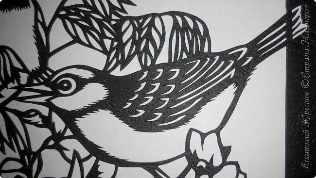 """Всем добрый день! Вашему вниманию новая открытка с птичками. - Серебряная белоглазка (Zosterops lateralis) — род птиц семейства белоглазковых.  - Область распространения простирается от Афротропики через восточный вплоть до австралийского-азиатского экорегиона.  - Наиболее выделяющийся признак белоглазок — это белое окологлазное кольцо. Тем не менее, у некоторых видов оно может быть также чёрным или вовсе отсутствовать. - Длина тела отдельных видов варьирует между 8 и 15 см. - Эскиз для """"вырезалки"""" выполнен, изменён и доработан по цветной работе австралийской художницы Dtidre Hunt. - Размер открытки 12х16см. фото 10"""