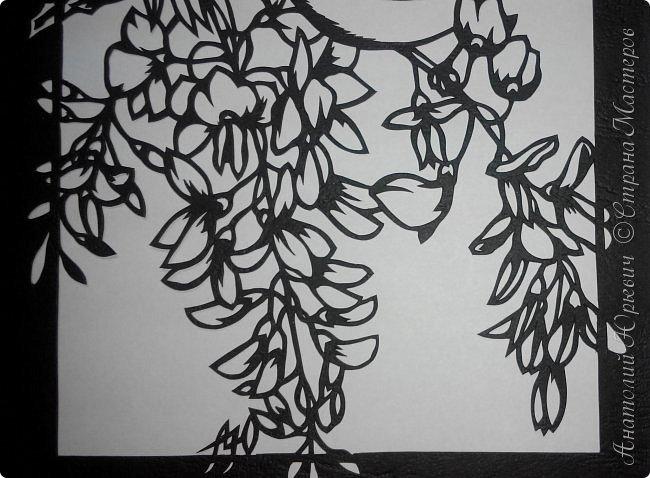 """Всем добрый день! Вашему вниманию новая открытка с птичками. - Серебряная белоглазка (Zosterops lateralis) — род птиц семейства белоглазковых.  - Область распространения простирается от Афротропики через восточный вплоть до австралийского-азиатского экорегиона.  - Наиболее выделяющийся признак белоглазок — это белое окологлазное кольцо. Тем не менее, у некоторых видов оно может быть также чёрным или вовсе отсутствовать. - Длина тела отдельных видов варьирует между 8 и 15 см. - Эскиз для """"вырезалки"""" выполнен, изменён и доработан по цветной работе австралийской художницы Dtidre Hunt. - Размер открытки 12х16см. фото 12"""