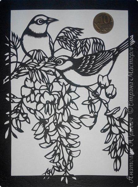 """Всем добрый день! Вашему вниманию новая открытка с птичками. - Серебряная белоглазка (Zosterops lateralis) — род птиц семейства белоглазковых.  - Область распространения простирается от Афротропики через восточный вплоть до австралийского-азиатского экорегиона.  - Наиболее выделяющийся признак белоглазок — это белое окологлазное кольцо. Тем не менее, у некоторых видов оно может быть также чёрным или вовсе отсутствовать. - Длина тела отдельных видов варьирует между 8 и 15 см. - Эскиз для """"вырезалки"""" выполнен, изменён и доработан по цветной работе австралийской художницы Dtidre Hunt. - Размер открытки 12х16см. фото 14"""