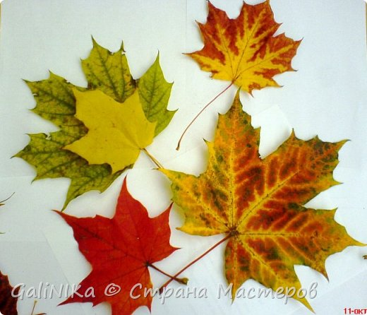 На этой неделе нашлось занятие для моего трёхлетнего внука.  Мы печатаем листья! фото 29