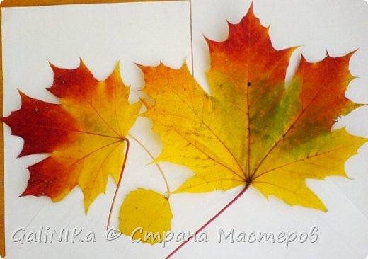На этой неделе нашлось занятие для моего трёхлетнего внука.  Мы печатаем листья! фото 37