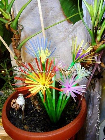 Придумались недавно у меня такие цветочки. Они простые, но забавные, моим знакомым понравились, поэтому решила их выложить. Можно использовать такие цветы как недорогое, но симпатичное украшение стола, можно украсить цветочный горшок или клумбу на даче. Так как они просты в изготовлении, их можно сделать вместе с детьми или использовать в каком-нибудь коллаже. Цветы из пластиковых трубочек в интернете встречаются, но сделанные по другой технологии, из срезанных наискосок кусочков трубочек. Цветы получаются похожие на георгины, красиво,но кончики лепестков получаются очень! острые. По-моему, это небезопасно, особенно при работе с детьми. Таких цветов, как у меня, не встретила.  фото 41
