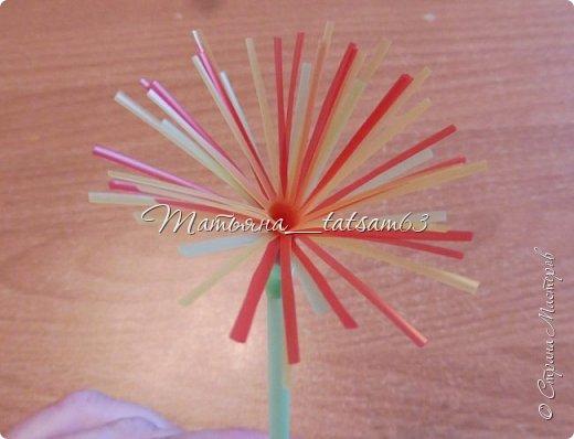 Придумались недавно у меня такие цветочки. Они простые, но забавные, моим знакомым понравились, поэтому решила их выложить. Можно использовать такие цветы как недорогое, но симпатичное украшение стола, можно украсить цветочный горшок или клумбу на даче. Так как они просты в изготовлении, их можно сделать вместе с детьми или использовать в каком-нибудь коллаже. Цветы из пластиковых трубочек в интернете встречаются, но сделанные по другой технологии, из срезанных наискосок кусочков трубочек. Цветы получаются похожие на георгины, красиво,но кончики лепестков получаются очень! острые. По-моему, это небезопасно, особенно при работе с детьми. Таких цветов, как у меня, не встретила.  фото 13