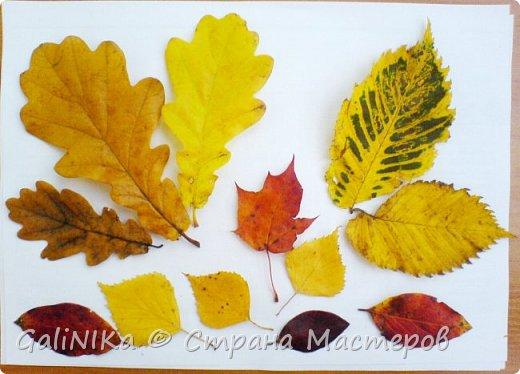 На этой неделе нашлось занятие для моего трёхлетнего внука.  Мы печатаем листья! фото 32
