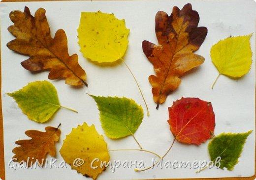 На этой неделе нашлось занятие для моего трёхлетнего внука.  Мы печатаем листья! фото 45