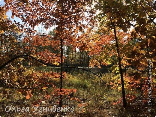 Приветствую всех жителей и гостей прекрасной СТРАНЫ МАСТЕРОВ!! Вчера выдался первый солнечный осенний денек в наших краях.  Я, кончено же, поспешила в лес, запечатлеть великолепные картины художницы Осени. Предлагаю и Вам, дорогой гость, насладиться этим зрелищем. фото 24