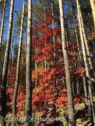 Приветствую всех жителей и гостей прекрасной СТРАНЫ МАСТЕРОВ!! Вчера выдался первый солнечный осенний денек в наших краях.  Я, кончено же, поспешила в лес, запечатлеть великолепные картины художницы Осени. Предлагаю и Вам, дорогой гость, насладиться этим зрелищем. фото 6