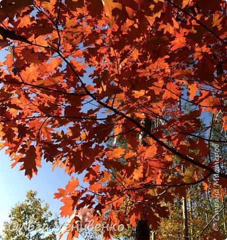 Приветствую всех жителей и гостей прекрасной СТРАНЫ МАСТЕРОВ!! Вчера выдался первый солнечный осенний денек в наших краях.  Я, кончено же, поспешила в лес, запечатлеть великолепные картины художницы Осени. Предлагаю и Вам, дорогой гость, насладиться этим зрелищем. фото 15