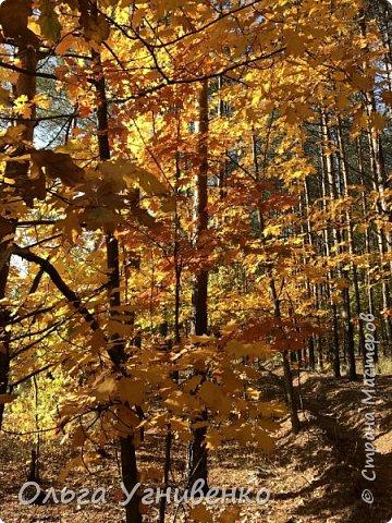 Приветствую всех жителей и гостей прекрасной СТРАНЫ МАСТЕРОВ!! Вчера выдался первый солнечный осенний денек в наших краях.  Я, кончено же, поспешила в лес, запечатлеть великолепные картины художницы Осени. Предлагаю и Вам, дорогой гость, насладиться этим зрелищем. фото 20