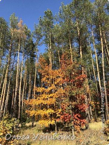 Приветствую всех жителей и гостей прекрасной СТРАНЫ МАСТЕРОВ!! Вчера выдался первый солнечный осенний денек в наших краях.  Я, кончено же, поспешила в лес, запечатлеть великолепные картины художницы Осени. Предлагаю и Вам, дорогой гость, насладиться этим зрелищем. фото 16
