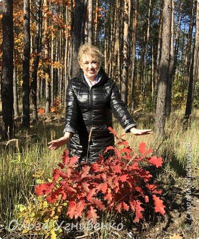 Приветствую всех жителей и гостей прекрасной СТРАНЫ МАСТЕРОВ!! Вчера выдался первый солнечный осенний денек в наших краях.  Я, кончено же, поспешила в лес, запечатлеть великолепные картины художницы Осени. Предлагаю и Вам, дорогой гость, насладиться этим зрелищем. фото 7