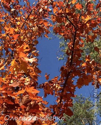 Приветствую всех жителей и гостей прекрасной СТРАНЫ МАСТЕРОВ!! Вчера выдался первый солнечный осенний денек в наших краях.  Я, кончено же, поспешила в лес, запечатлеть великолепные картины художницы Осени. Предлагаю и Вам, дорогой гость, насладиться этим зрелищем. фото 8