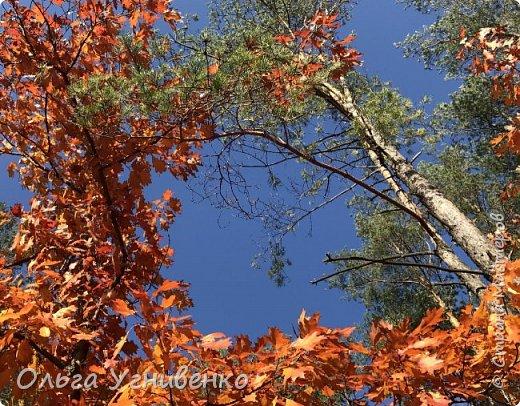 Приветствую всех жителей и гостей прекрасной СТРАНЫ МАСТЕРОВ!! Вчера выдался первый солнечный осенний денек в наших краях.  Я, кончено же, поспешила в лес, запечатлеть великолепные картины художницы Осени. Предлагаю и Вам, дорогой гость, насладиться этим зрелищем. фото 1