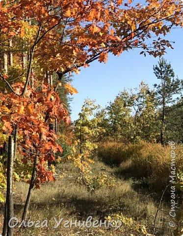 Приветствую всех жителей и гостей прекрасной СТРАНЫ МАСТЕРОВ!! Вчера выдался первый солнечный осенний денек в наших краях.  Я, кончено же, поспешила в лес, запечатлеть великолепные картины художницы Осени. Предлагаю и Вам, дорогой гость, насладиться этим зрелищем. фото 3