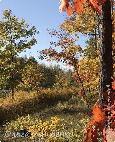 Приветствую всех жителей и гостей прекрасной СТРАНЫ МАСТЕРОВ!! Вчера выдался первый солнечный осенний денек в наших краях.  Я, кончено же, поспешила в лес, запечатлеть великолепные картины художницы Осени. Предлагаю и Вам, дорогой гость, насладиться этим зрелищем. фото 14