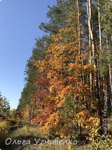 Приветствую всех жителей и гостей прекрасной СТРАНЫ МАСТЕРОВ!! Вчера выдался первый солнечный осенний денек в наших краях.  Я, кончено же, поспешила в лес, запечатлеть великолепные картины художницы Осени. Предлагаю и Вам, дорогой гость, насладиться этим зрелищем. фото 9