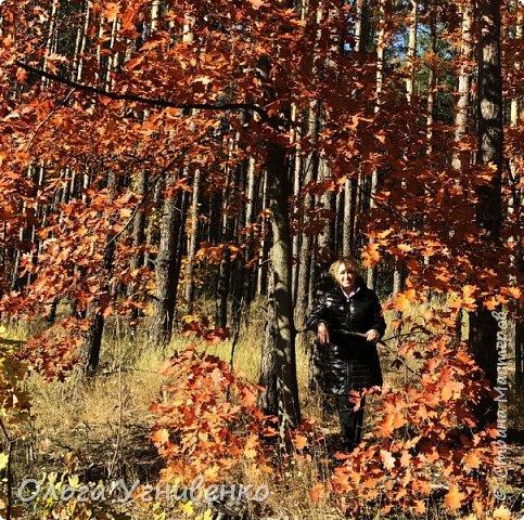 Приветствую всех жителей и гостей прекрасной СТРАНЫ МАСТЕРОВ!! Вчера выдался первый солнечный осенний денек в наших краях.  Я, кончено же, поспешила в лес, запечатлеть великолепные картины художницы Осени. Предлагаю и Вам, дорогой гость, насладиться этим зрелищем. фото 4