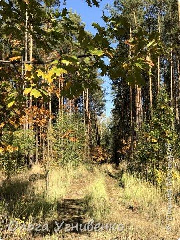 Приветствую всех жителей и гостей прекрасной СТРАНЫ МАСТЕРОВ!! Вчера выдался первый солнечный осенний денек в наших краях.  Я, кончено же, поспешила в лес, запечатлеть великолепные картины художницы Осени. Предлагаю и Вам, дорогой гость, насладиться этим зрелищем. фото 10
