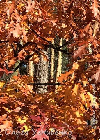 Приветствую всех жителей и гостей прекрасной СТРАНЫ МАСТЕРОВ!! Вчера выдался первый солнечный осенний денек в наших краях.  Я, кончено же, поспешила в лес, запечатлеть великолепные картины художницы Осени. Предлагаю и Вам, дорогой гость, насладиться этим зрелищем. фото 11