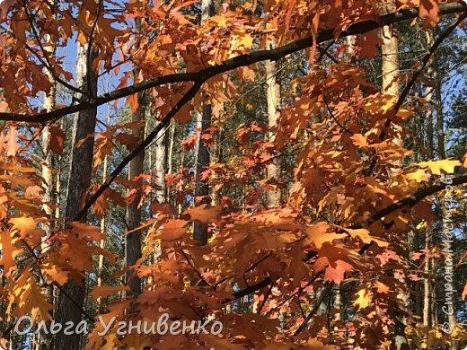 Приветствую всех жителей и гостей прекрасной СТРАНЫ МАСТЕРОВ!! Вчера выдался первый солнечный осенний денек в наших краях.  Я, кончено же, поспешила в лес, запечатлеть великолепные картины художницы Осени. Предлагаю и Вам, дорогой гость, насладиться этим зрелищем. фото 12