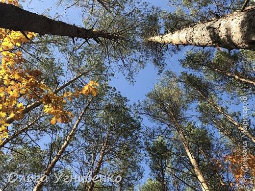 Приветствую всех жителей и гостей прекрасной СТРАНЫ МАСТЕРОВ!! Вчера выдался первый солнечный осенний денек в наших краях.  Я, кончено же, поспешила в лес, запечатлеть великолепные картины художницы Осени. Предлагаю и Вам, дорогой гость, насладиться этим зрелищем. фото 19
