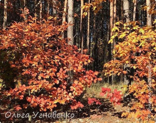 Приветствую всех жителей и гостей прекрасной СТРАНЫ МАСТЕРОВ!! Вчера выдался первый солнечный осенний денек в наших краях.  Я, кончено же, поспешила в лес, запечатлеть великолепные картины художницы Осени. Предлагаю и Вам, дорогой гость, насладиться этим зрелищем. фото 22