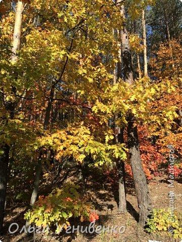 Приветствую всех жителей и гостей прекрасной СТРАНЫ МАСТЕРОВ!! Вчера выдался первый солнечный осенний денек в наших краях.  Я, кончено же, поспешила в лес, запечатлеть великолепные картины художницы Осени. Предлагаю и Вам, дорогой гость, насладиться этим зрелищем. фото 23