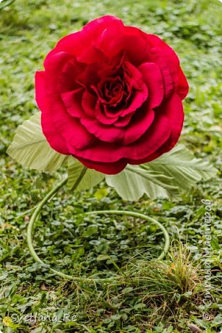 Давно меня привлекают цветы больших размеров, вот решила наваять несколько)) Так сказать, последний привет ушедшему лету))  Думаю, это прекрасное украшение любого торжества...    фото 19
