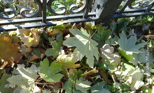 Октябрь — стремительный, такой сочный, такой ароматный в своём золотисто-алом сиянии, с ранними белыми заморозками, с ярким преображением листьев — это совсем другая, волшебная пора, последний дерзкий ликующий всплеск перед лицом надвигающейся стужи. Падают орехи, каштаны в колючих шубках, жёлуди, теряя свои очаровательные шапочки. Мне нравится вышивать мотивы с осенними дарами. фото 9