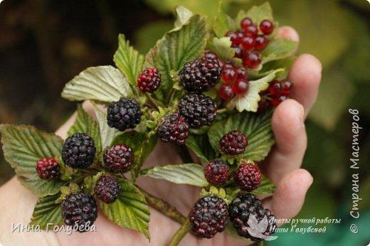Привет всем жителям Страны!!! Сегодня я к вам с ягодами.Веточки ежевики для композиции и веточка смородины для броши.И поделюсь,как я тонировала листики ежевики. фото 1