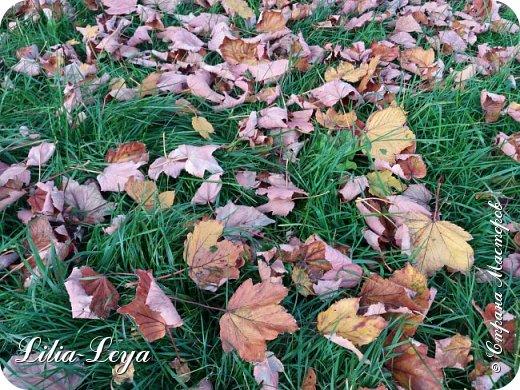 Вряд ли кто будет оспаривать, что осень - во всём мире общепризнанная ткачиха ковров. Её мастерство способно пленить любого! фото 11