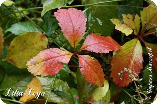Вряд ли кто будет оспаривать, что осень - во всём мире общепризнанная ткачиха ковров. Её мастерство способно пленить любого! фото 12