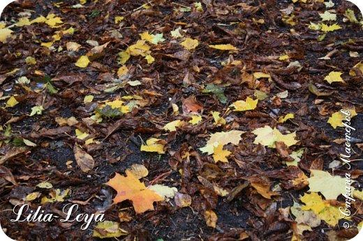 Вряд ли кто будет оспаривать, что осень - во всём мире общепризнанная ткачиха ковров. Её мастерство способно пленить любого! фото 13