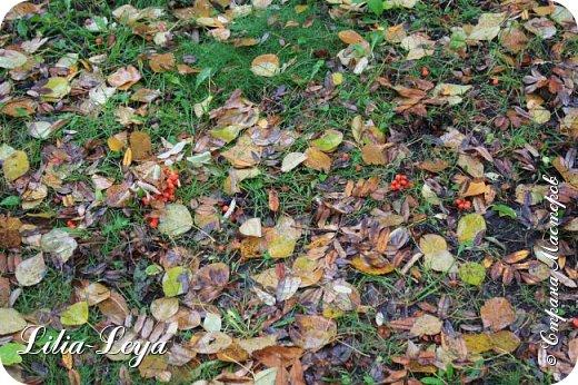 Вряд ли кто будет оспаривать, что осень - во всём мире общепризнанная ткачиха ковров. Её мастерство способно пленить любого! фото 14