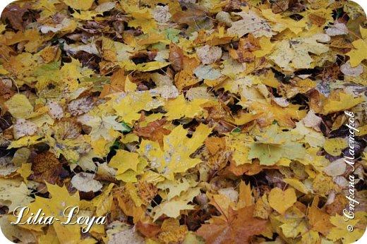 Вряд ли кто будет оспаривать, что осень - во всём мире общепризнанная ткачиха ковров. Её мастерство способно пленить любого! фото 15