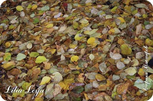 Вряд ли кто будет оспаривать, что осень - во всём мире общепризнанная ткачиха ковров. Её мастерство способно пленить любого! фото 16