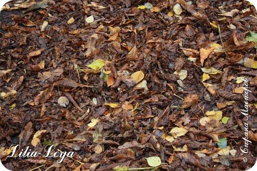 Вряд ли кто будет оспаривать, что осень - во всём мире общепризнанная ткачиха ковров. Её мастерство способно пленить любого! фото 18