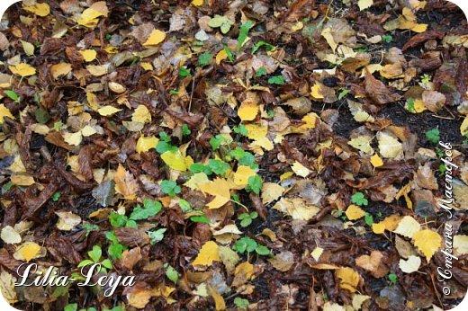 Вряд ли кто будет оспаривать, что осень - во всём мире общепризнанная ткачиха ковров. Её мастерство способно пленить любого! фото 19