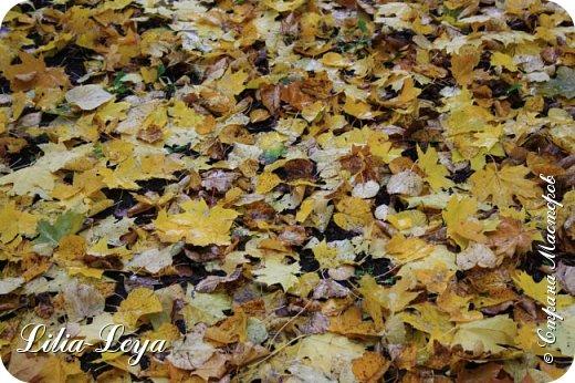 Вряд ли кто будет оспаривать, что осень - во всём мире общепризнанная ткачиха ковров. Её мастерство способно пленить любого! фото 23
