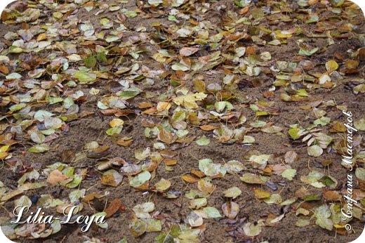 Вряд ли кто будет оспаривать, что осень - во всём мире общепризнанная ткачиха ковров. Её мастерство способно пленить любого! фото 24