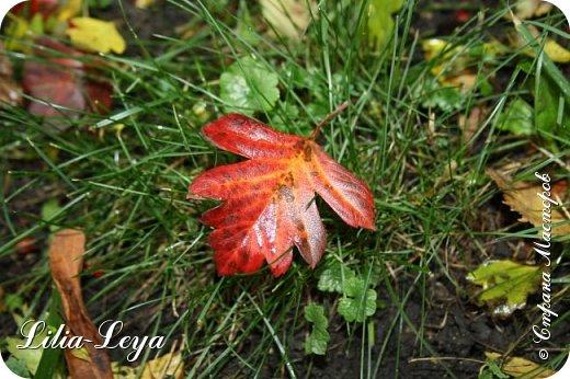 Вряд ли кто будет оспаривать, что осень - во всём мире общепризнанная ткачиха ковров. Её мастерство способно пленить любого! фото 25
