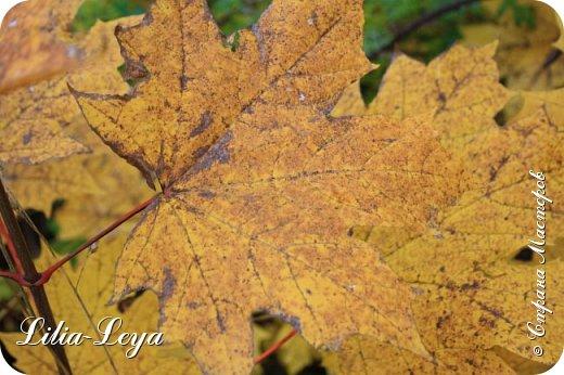 Вряд ли кто будет оспаривать, что осень - во всём мире общепризнанная ткачиха ковров. Её мастерство способно пленить любого! фото 27