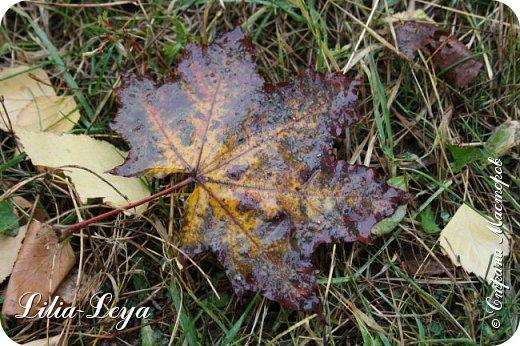Вряд ли кто будет оспаривать, что осень - во всём мире общепризнанная ткачиха ковров. Её мастерство способно пленить любого! фото 28