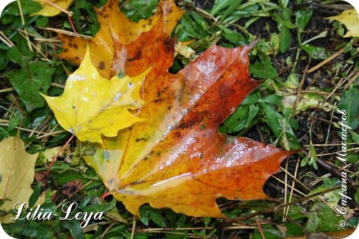 Вряд ли кто будет оспаривать, что осень - во всём мире общепризнанная ткачиха ковров. Её мастерство способно пленить любого! фото 29