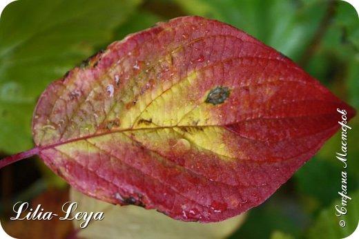 Вряд ли кто будет оспаривать, что осень - во всём мире общепризнанная ткачиха ковров. Её мастерство способно пленить любого! фото 30