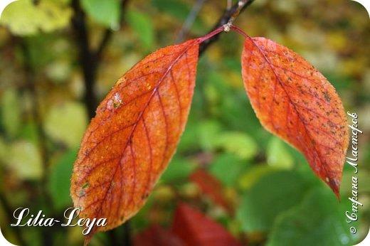Вряд ли кто будет оспаривать, что осень - во всём мире общепризнанная ткачиха ковров. Её мастерство способно пленить любого! фото 31